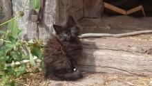 Oddam kotka z długim puszystym futerkiem ( prawdopodobnie pół rasowy )