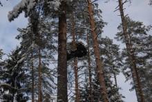 Alpiniści zbierają szyszki [zdjęcia]