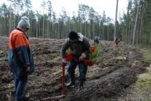 Sadzi jedno drzewko na sekundę. Putiputek pomaga odnowić zasoby leśne [zdjęcia]