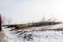 s61wycinka-drzew011.jpg