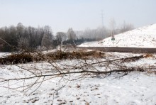 s61wycinka-drzew012.jpg