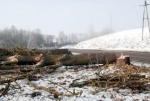 s61wycinka-drzew015.jpg
