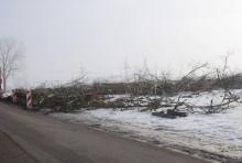 s61wycinka-drzew017.jpg