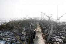 s61wycinka-drzew024.jpg