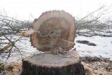 s61wycinka-drzew035.jpg