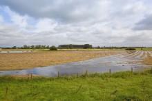 Pieniądze na inwestycje chroniące gospodarstwa przed ASF lub powodzią. Ruszył nabór wniosków