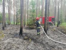 Pożar lasu koło Augustowa [zdjęcia]