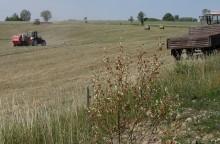 Susza. Formy pomocy rolnikom