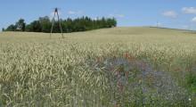 Będą ceny urzędowe w rolnictwie?