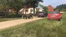 Gmina Giby. Dwaj mężczyźni usłyszeli zarzut znęcania się nad klaczą