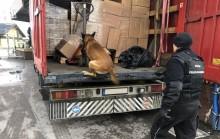 Owczarek belgijski wywąchał przemyt. Litewskiemu kierowcy grozi 10 lat więzienia