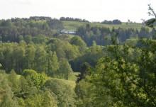 Rolniku - posadź las i weź dofinansowanie. Nawet 7 tysięcy za hektar, a przez 12 lat premie
