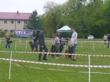 Zwyciężył berneński pies pasterski. II Krajowa Wystawa Psów Rasowych w Dowspudzie [wideo, zdjęcia]