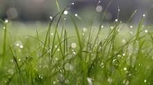 Pomóc rolnikom obronić się przed suszą. Nawet 100 tysięcy złotych  na nawodnienie