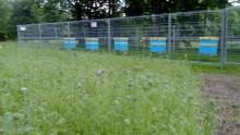 Uczniowie szkoły w Dowspudzie mogą się uczyć pszczelarstwa. Ule już są