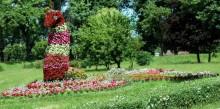 Rabaty kwiatowe. Paw ustępuje pola 300-leciu Suwałk [zdjęcia]