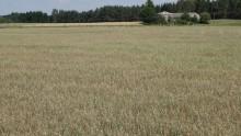 Rolnictwo. Od wczoraj do 31 sierpnia 2020 rolnicy mogą składać wnioski o przyznanie pomocy