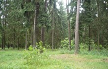 Prywatny las z unijną dotacją. Nawet 14 tysięcy złotych za hektar