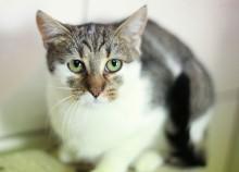 Budki dla kotów wolno żyjących w Suwałkach