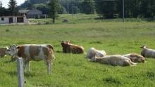 Rolnictwo. Modernizacja gospodarstw: pięć naborów wniosków w jednym terminie