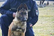 Orkan - nowy pies służbowy w suwalskiej Policji [zdjęcia]