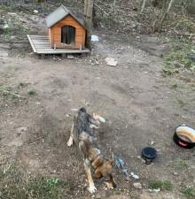 Krasnopol. Policjanci interweniowali w sprawie wychudzonego psa