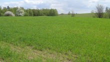 Rolnictwo. Termin składania wniosków o dopłaty bezpośrednie wydłużono do 17 czerwca