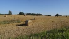 Rolnictwo. Wypłata zaliczek na poczet dopłat bezpośrednich ruszy 18 października