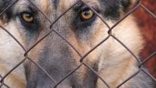 Dziewczynka pogryziona przez psa koło Olecka