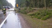 Silny wiatr przewracał drzewa