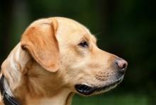 Masz psa? Pamiętaj o obowiązkowym szczepieniu przeciwko wściekliźnie