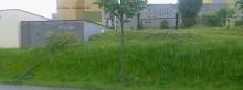 Policja zapoluje na niszczyciela drzewek [interwencja]