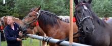 Bakałarzewo. 40 koni na 500-lecie wsi [zdjęcia]