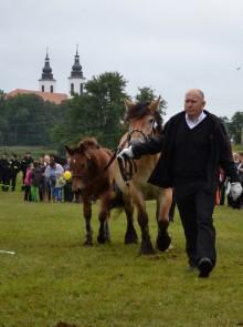 Wystawa koni zimnokrwistych w Bakałarzewie