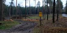 Odmładzanie lasów