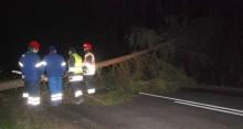 Drzewa przestaną zagrażać kierowcom [interwencja]