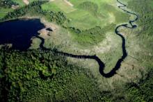 Flora i fauna Doliny Rospudy